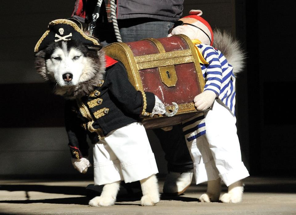 Dog_in_pirate_costume