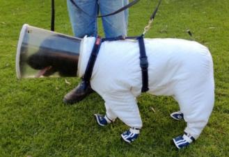 bazz-beekeeper-dog