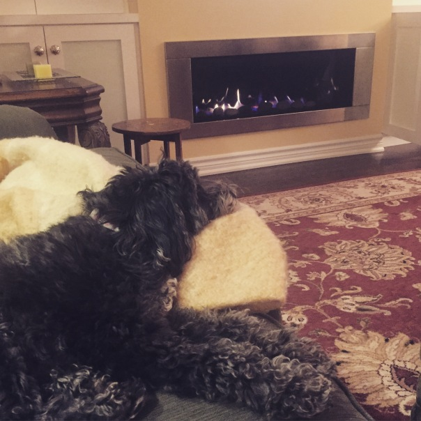 Ollie, cozy in front of the fireplace.